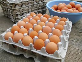 papper egg trays